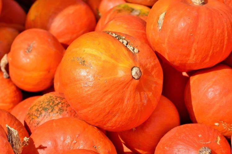pumpkin-3735640_1920